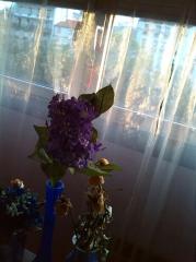 fleurs mauves et voile.png
