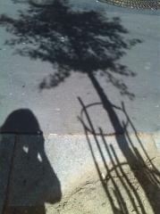 arbre cercles.png